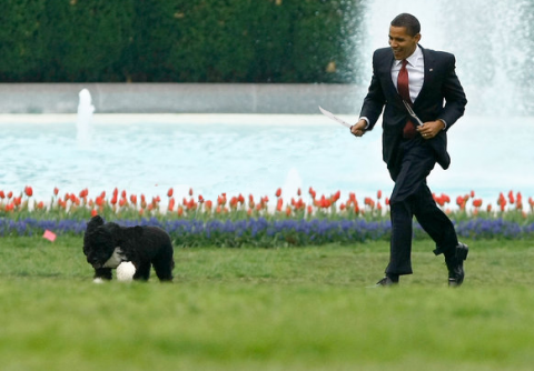 Obama chases Bo with Utensils