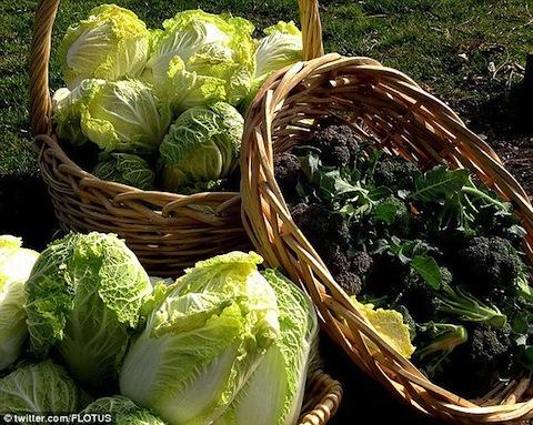 Michelle cabbage